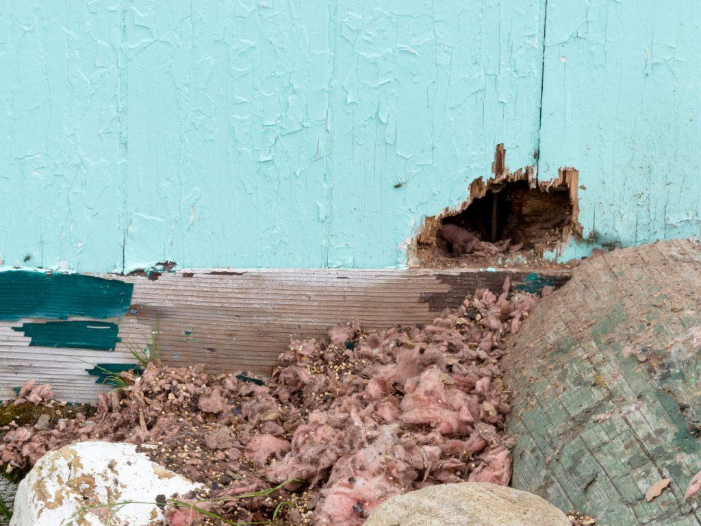 rat infestation property damage