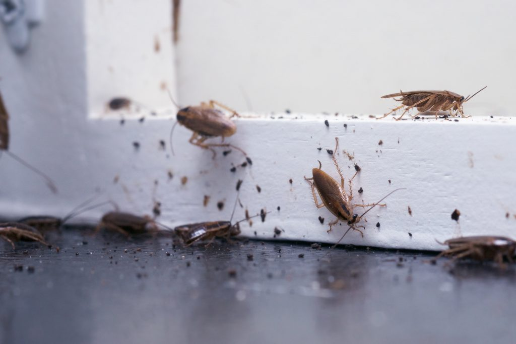 residential cockroach infestation
